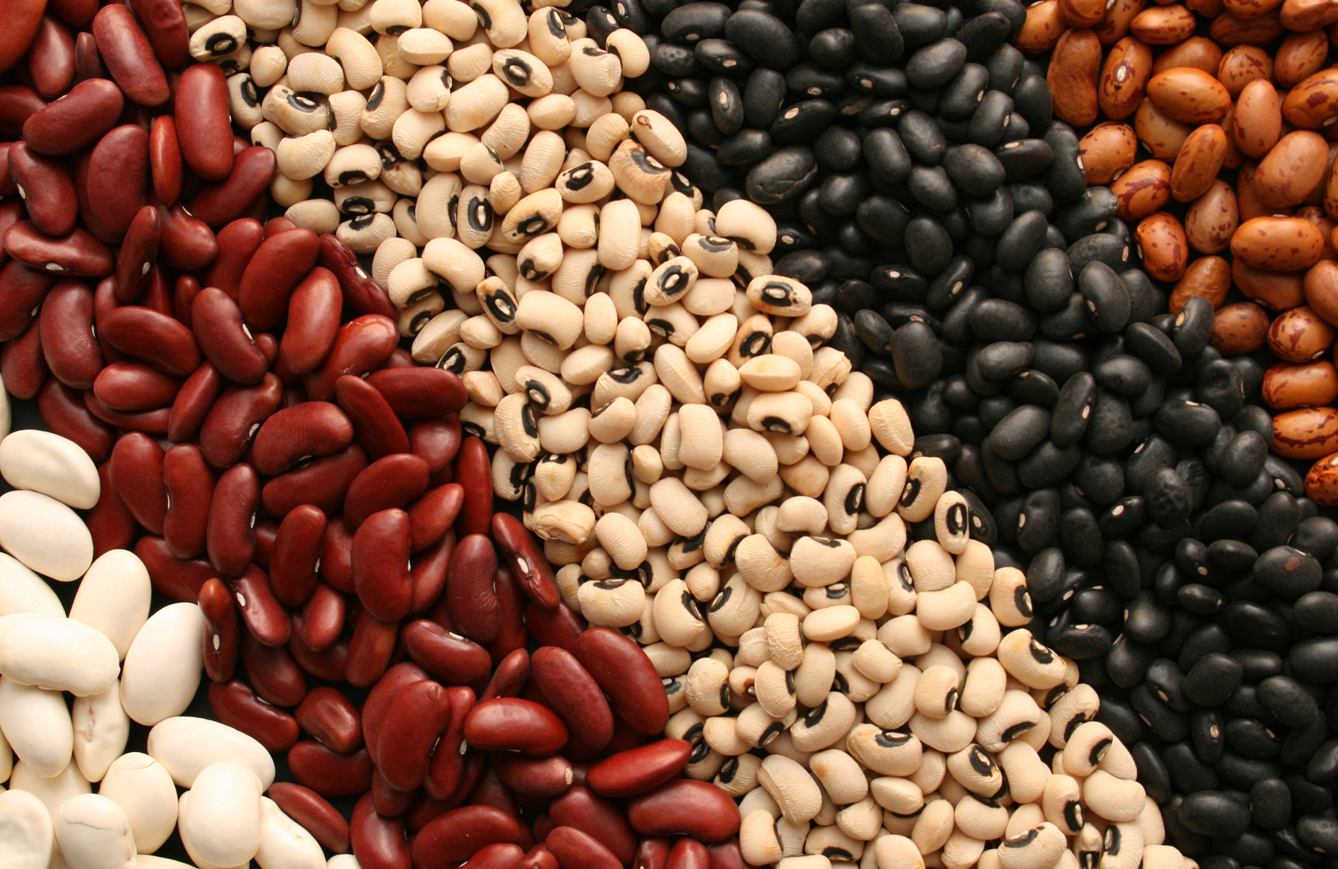 Beans benefits in tamil 1