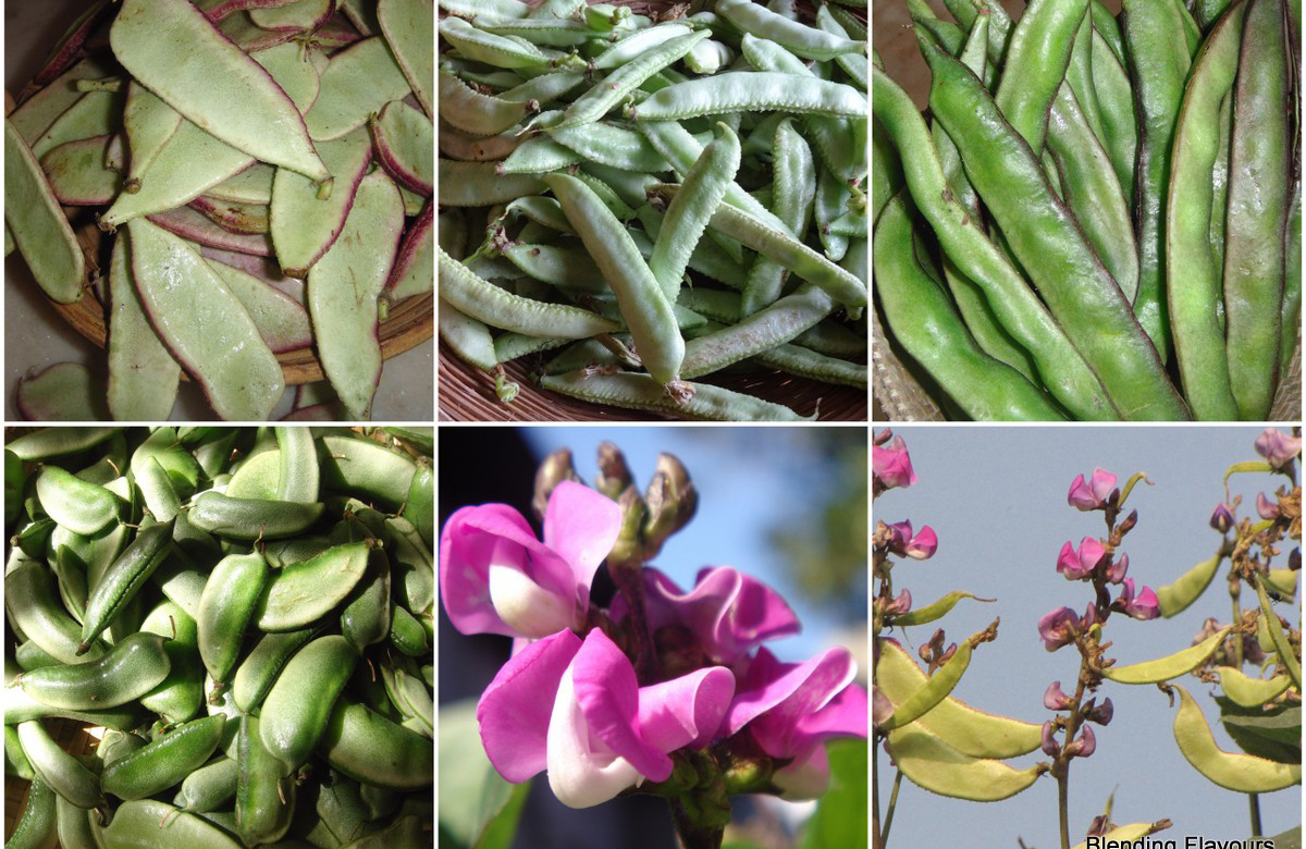 Beans benefits in tamil 2
