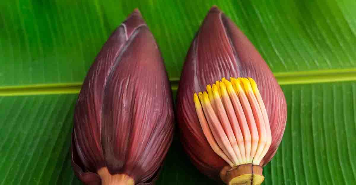 vazhaipoo benefits in tamil