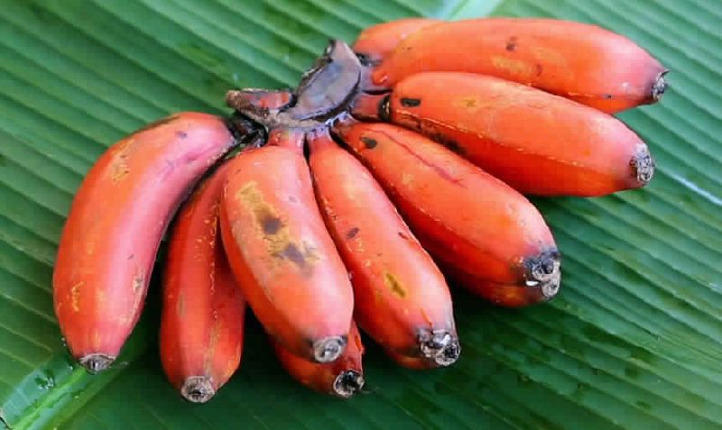 red banana benefits in tamil