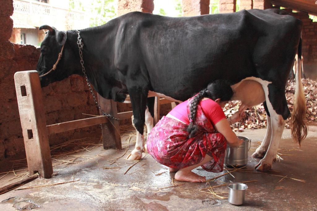 oksitosin and antibiotics benefits in tamil