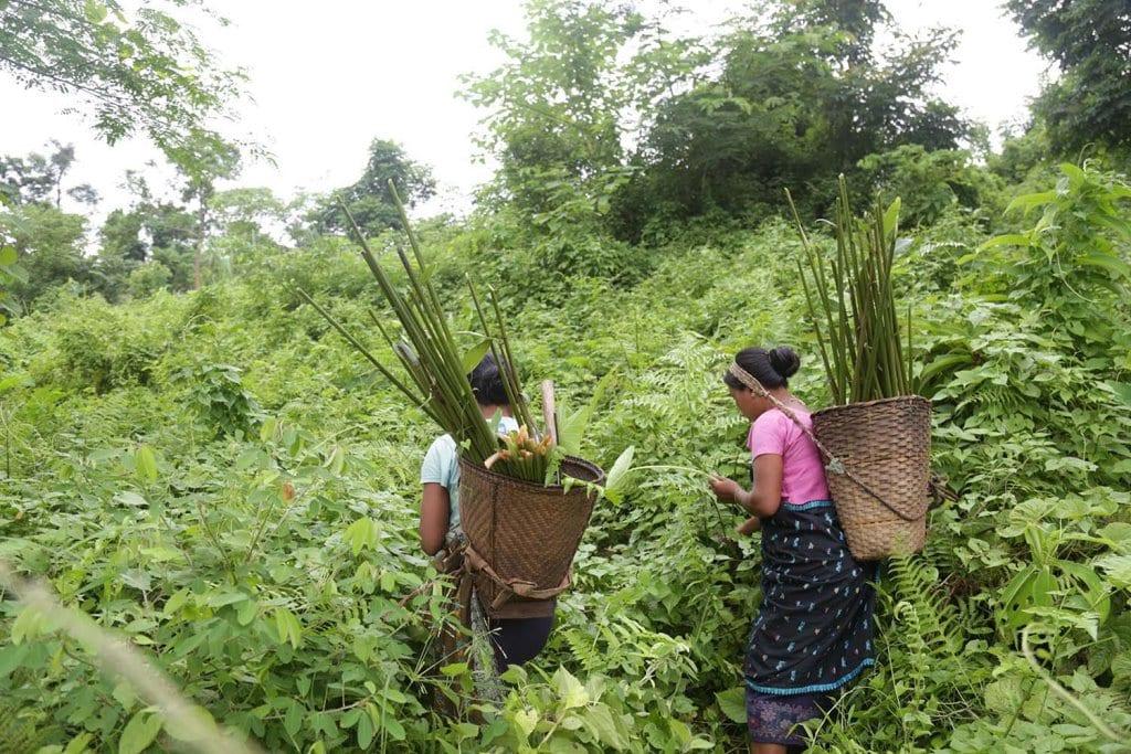 tribal herbal medicine in tamil