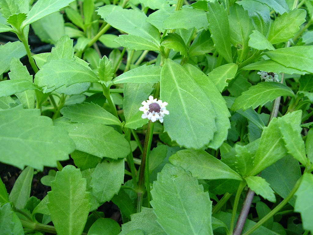 poduthalai benefits in tamil