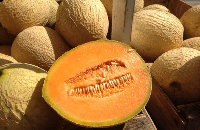 musk melon benefits in tamil